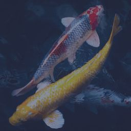 Koi fish symbolize marketing mix